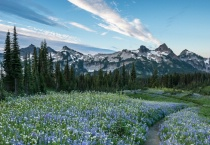 Tatoosh Range and Wildflowers at Sunrise