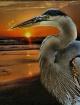 Bird's Eye Vi...