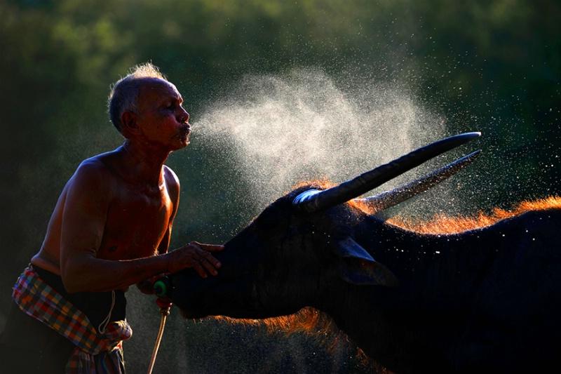 Friendly with Human and Animal - ID: 14555133 © Kyaw Kyaw Winn