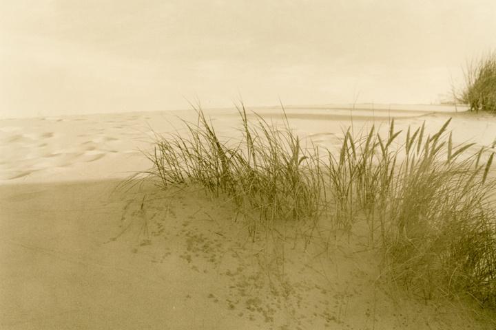 Dune Study #8 - ID: 14556864 © Joan E. Bowers