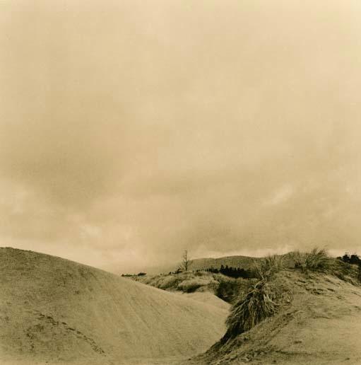 Eel River Dune #1 - ID: 14556961 © Joan E. Bowers