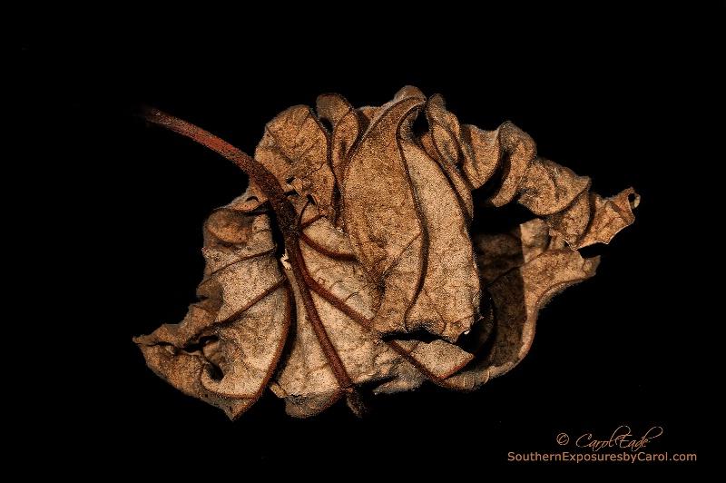 Wrinkled Beauty - ID: 14559172 © Carol Eade