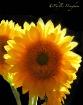 Sunshiny Days For...