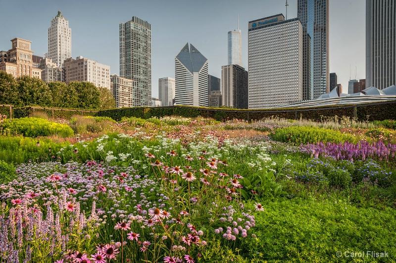 Chicago's Lurie Garden - ID: 14572531 © Carol Flisak
