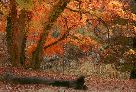 Lost Maples State Park