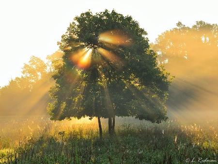 Foggy Sunrise II