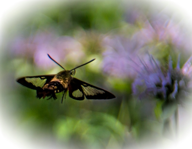To Nectar Paradise