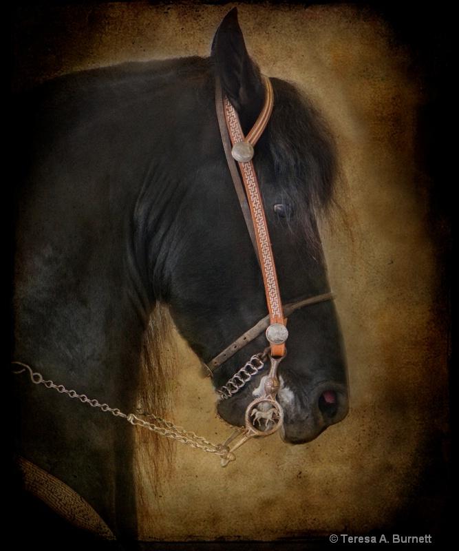 The Black Stallion - ID: 14584403 © Teresa A. Burnett