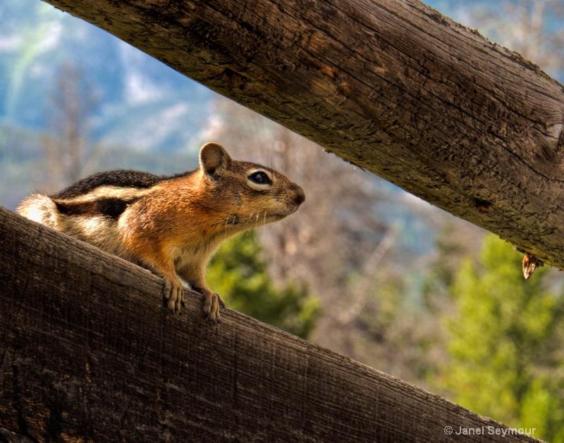 Lookout Scout - ID: 14584997 © Janel Seymour