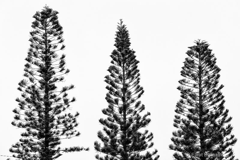Trees - ID: 14586507 © Elliot S. Barnathan