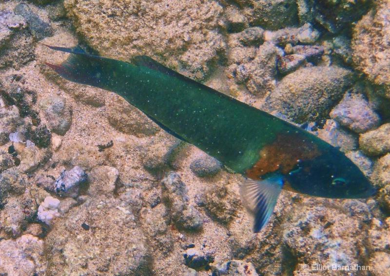 Underwater 23 - ID: 14586849 © Elliot S. Barnathan