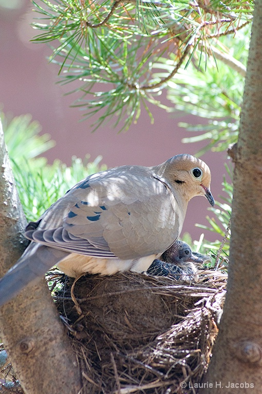 The Nest's Second Family - ID: 14586883 © Laurie H. Jacobs