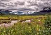 Untamed Alaska