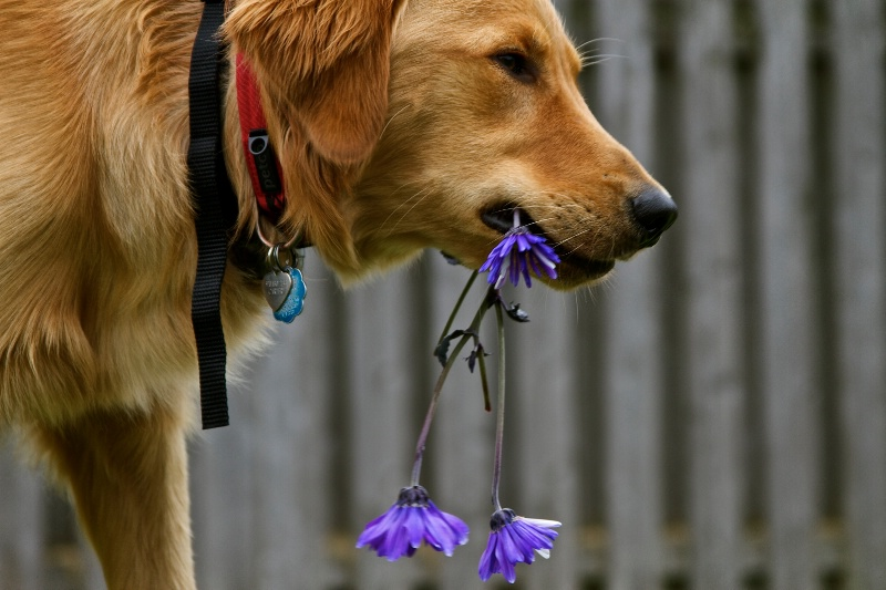 What flowers?