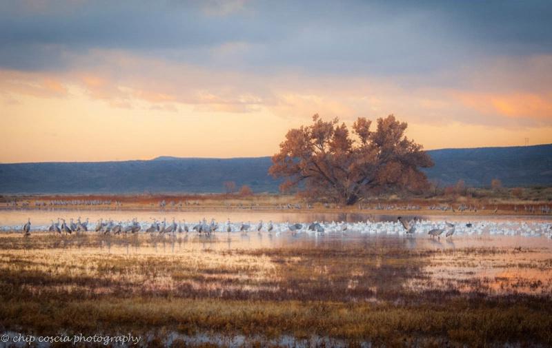 Sunrise at Bosque del Apache - ID: 14614160 © Chip Coscia