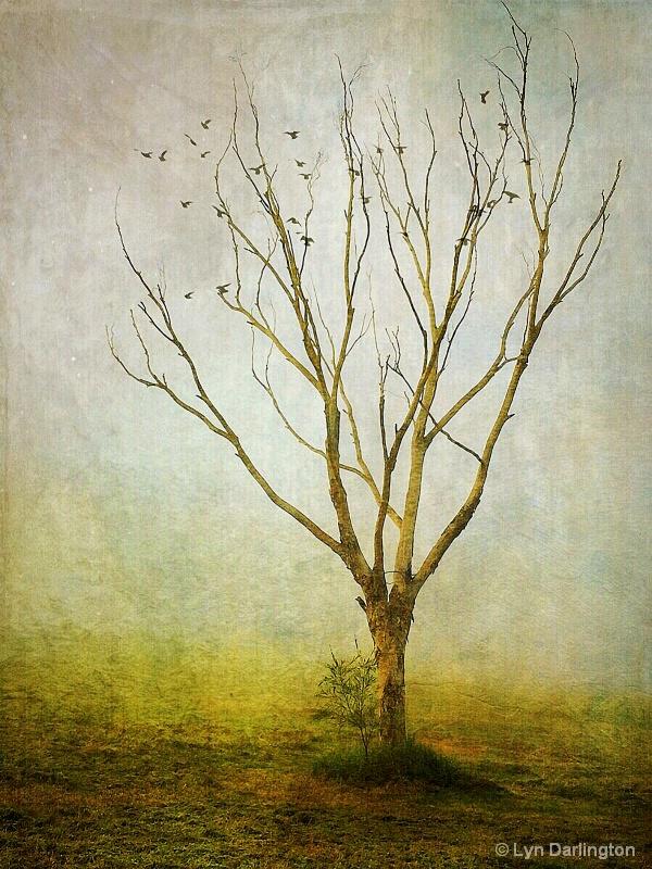 Lonely tree!