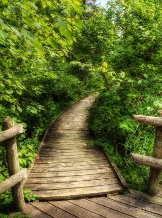 Path of Peace