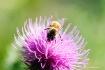 Pollination Patro...