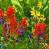 © Phil Burdick PhotoID # 14625585: Washington Gulch Bouquet