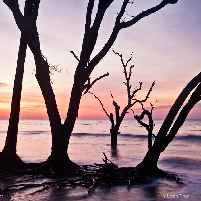 Dawn at Boneyard Beach - ID: 14626113 © Loan Tran