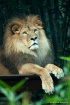 Taronga Zoo Sydne...