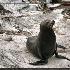 © Trudy L. Smuin PhotoID# 14626820: ~ Seal Beach ~