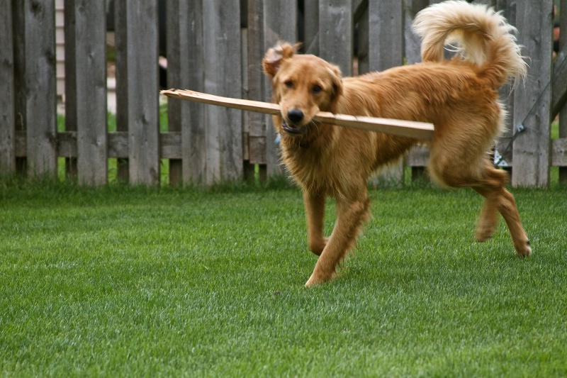 Playing keep away with a stick