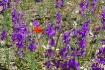 Flowers of the De...