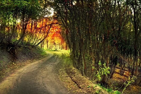 Mountian Road