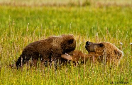 Nursing Bear Cub