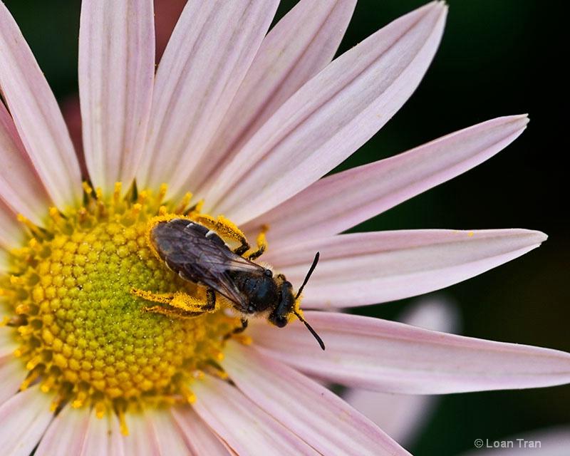 Pollen Collector - ID: 14651384 © Loan Tran