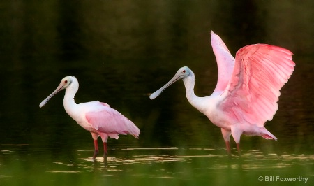 Spoonbill's By Pond Edge