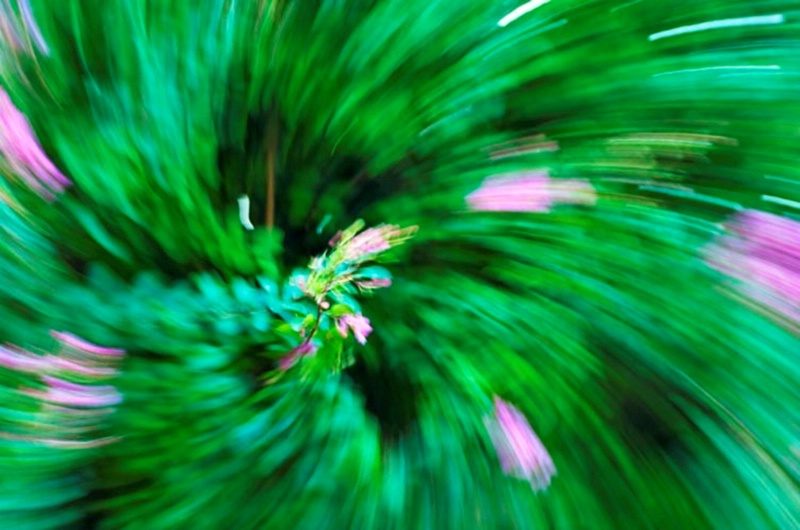 Flora Movement