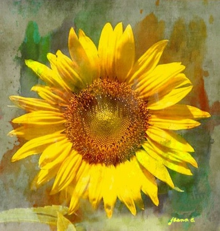 Portrait of a Sunflower!