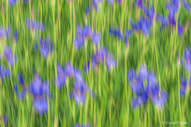Impressionistic Irises 2 - ID: 14662295 © Carol Flisak
