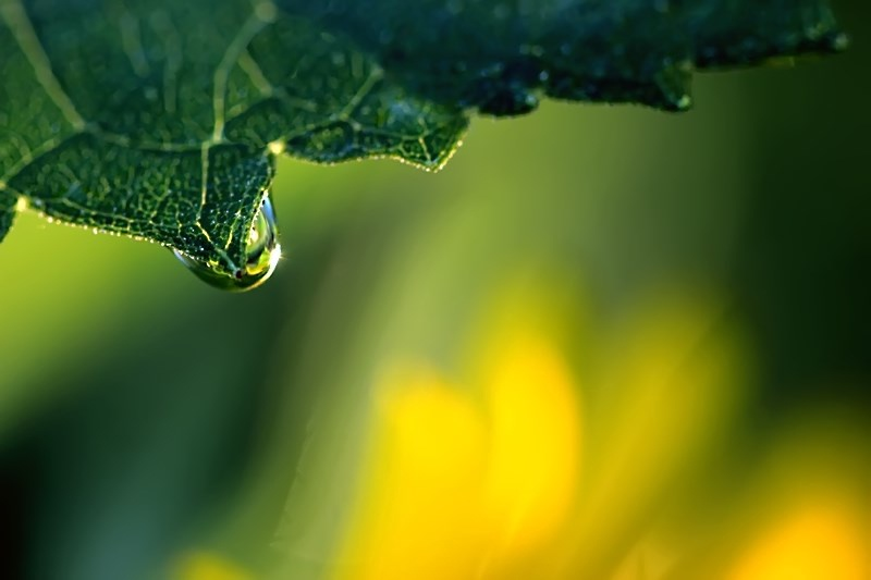 Reflecting In A Raindrop