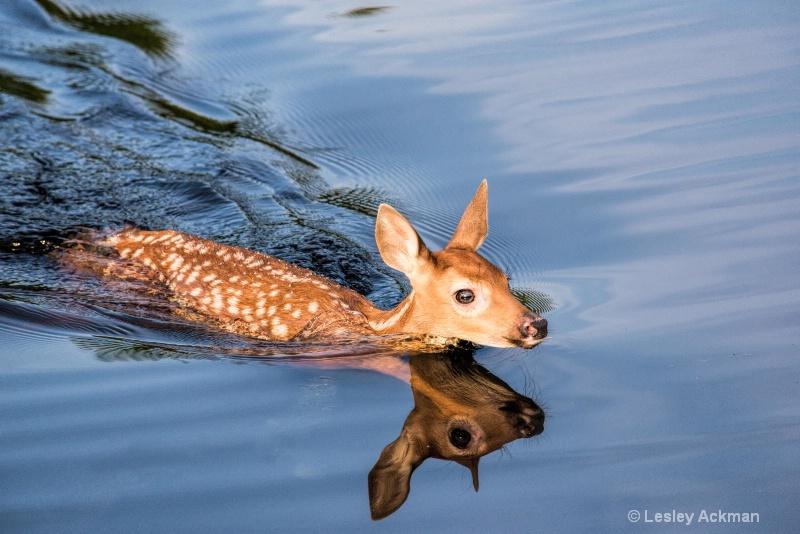 Dip in the Pond