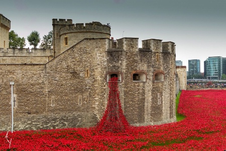 POPPIES at the LONDON TOWER