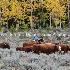 © Diane Garcia PhotoID # 14678623: east daniels cattlemen 1