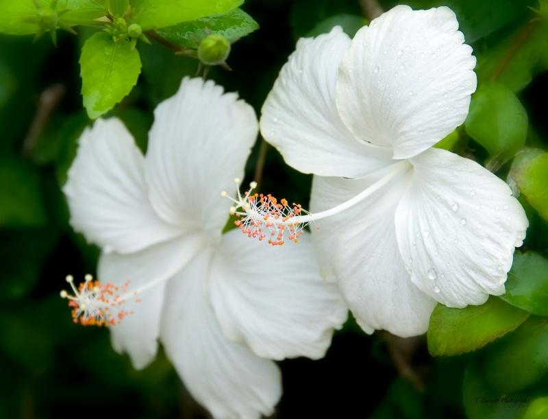Tropic Splendor - ID: 14680932 © Teresa A. Burnett