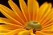 Soft Yellow