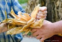 Helping Hands 0011690