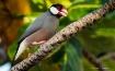 A Bird Of Paradis...