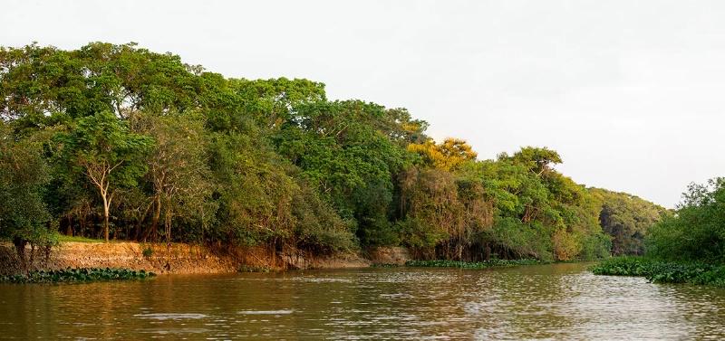 pantanal-river-panorama1-pantanal--aug-22-a - ID: 14692415 © Michael Stern