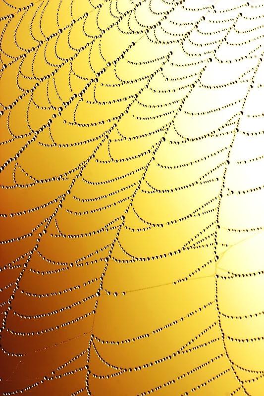 A Web