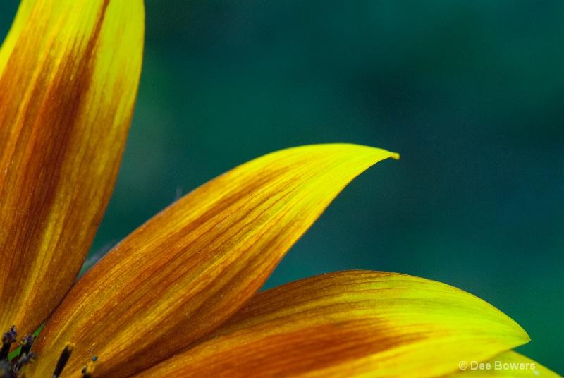"""""""Graham's Flower"""""""
