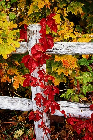The Autumn Fence