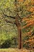 Autumn In Bantam