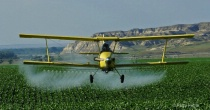 Spraying Sugarbeets Headon