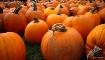 The Pumpkin Guys